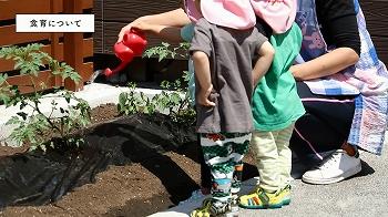 ▲園庭の一角にある小さな畑では、夏野菜のトマトやナスなどを栽培中。2歳児クラスの子どもたちが散歩へ出発する前などに日々のお世話をしています。