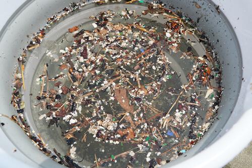 お台場で採取したプラスチックごみの中でいちばん多いものは、意外にも人工芝の破片でした。