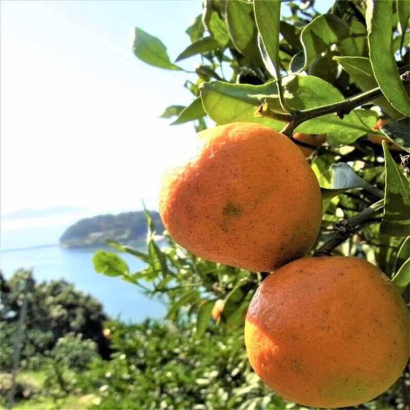 無茶々園から柑橘農家・ちりめん漁師がやってくる!