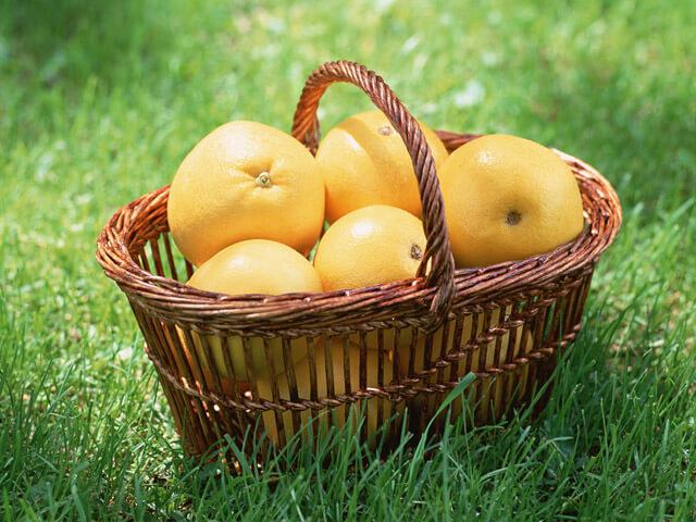 旬の果物 試食会