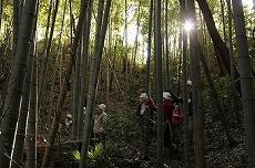 竹林ゾーンの所々には急な斜面も。