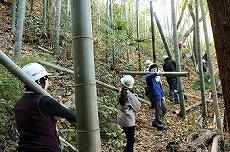 玉切りした竹を運び出し。ここが一苦労!