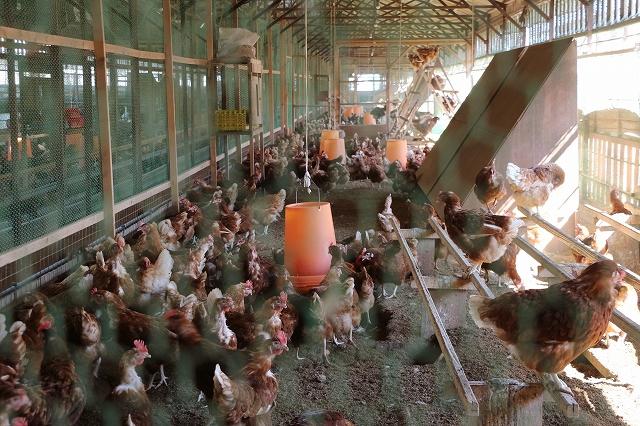「農事組合法人トキワ養鶏」について