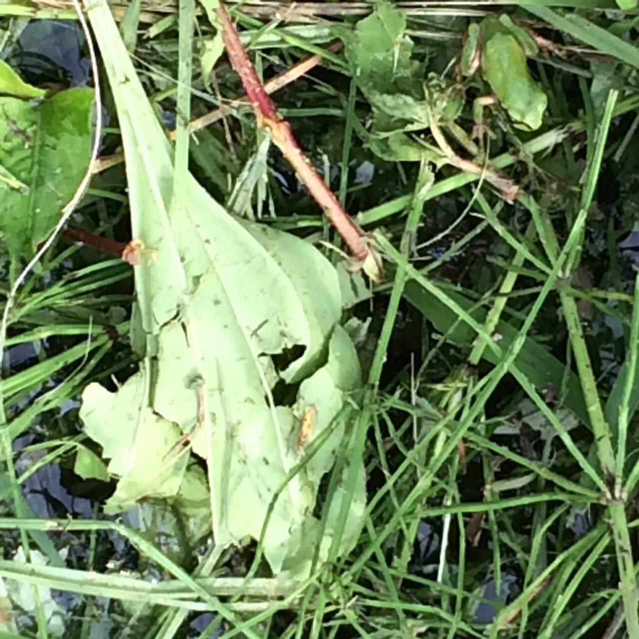 ▲農薬を削減した田んぼには生き物がたくさん。 とんぼも蛍も飛んできます♪