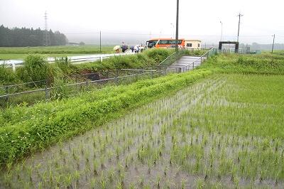 用水路の両脇に広がる田んぼでは、水が適切に管理され、稲の苗がすくすくと成長していました。今年は非常に雨が少なく、前日までの日照りでダムの取水制限も始まっていましたが、見学に訪れたこの日は久々の雨で、田んぼにとっても小水力発電にとっても、恵みの雨となりました。