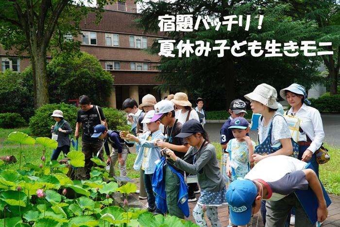 2019年度環境キャンペーン  東京大学で「宿題バッチリ!『夏休み子ども生きモニ』」