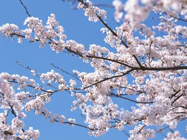 はるめく春メイク(ほんもの実感)
