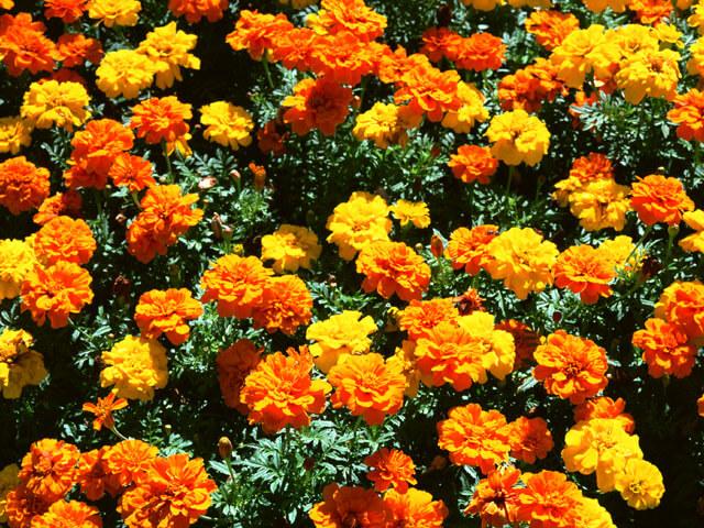 季節を先取り「春物リース作り」