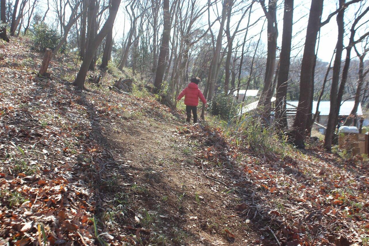 落ち葉をよけて、小枝を並べたら、立派な道になりました!