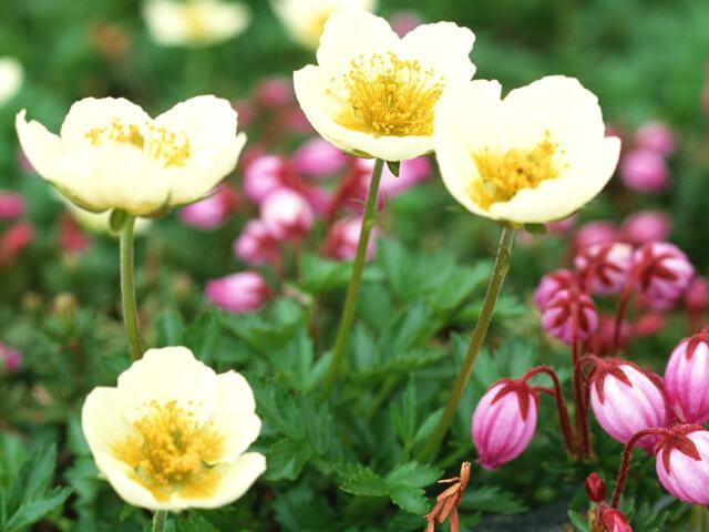 中国伝統の養生知識「かっさ法」を学びませんか ~花粉症など季節の変わり目の不調対策に~