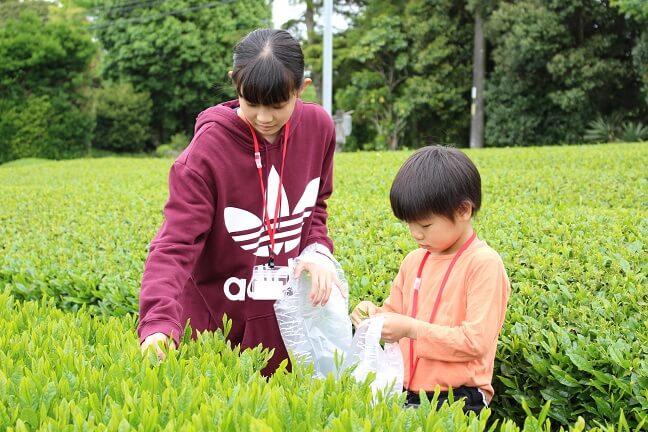 静岡の春がやってきた!世界農業遺産の茶畑に行ってみよう!