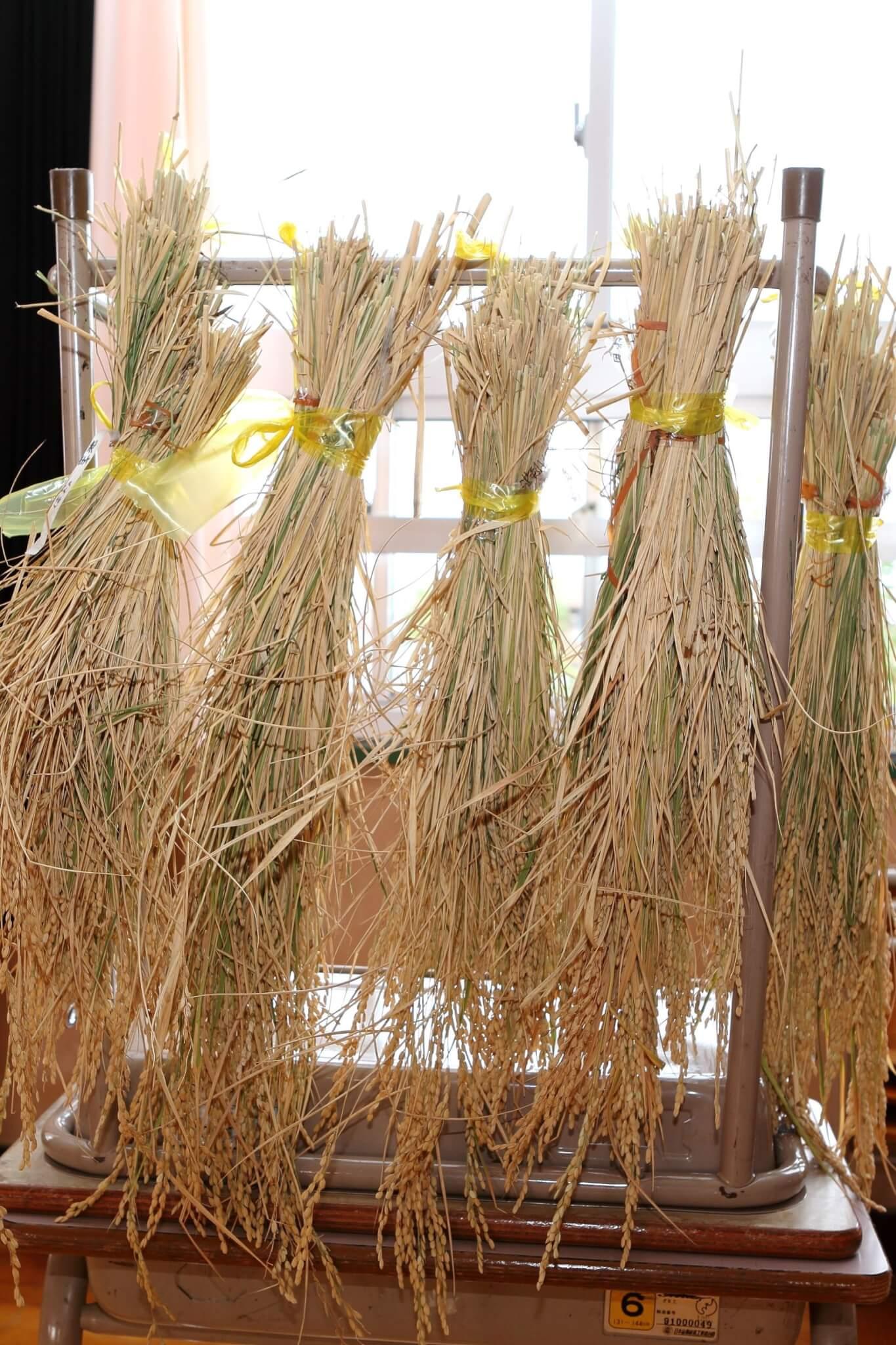 ★稲を干して乾燥(かんそう)させましょう★