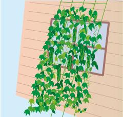 ●暑さは窓からやってくる!