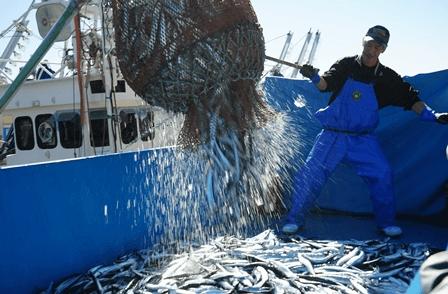 サンマの水揚げを見学。小名浜漁協では、漁獲したすべての魚種をモニタリング検査する等、放射能対策に取り組んでいます