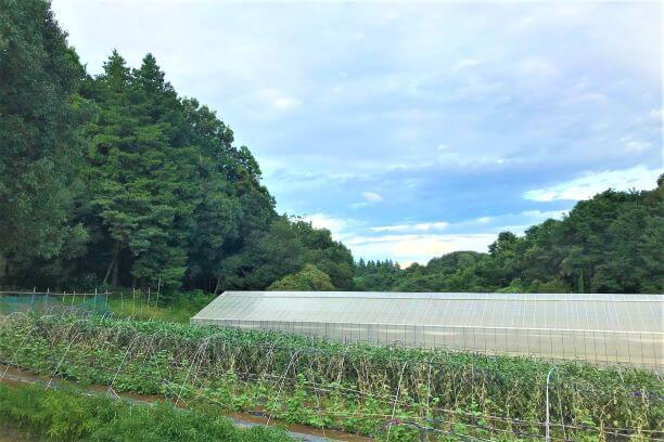 都内とは思えない自然あふれる森農園を望む