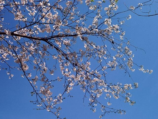 早春の「いなぎめぐみの里山」周辺を散策してみませんか?
